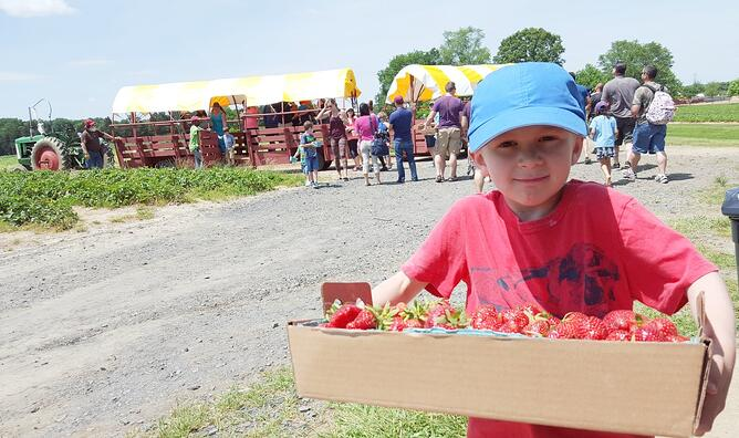 Linvilla Orchards strawberry harvest with boy and blue cap-1